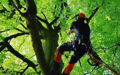Abattage d'arbre à Thionville en toute sécurité